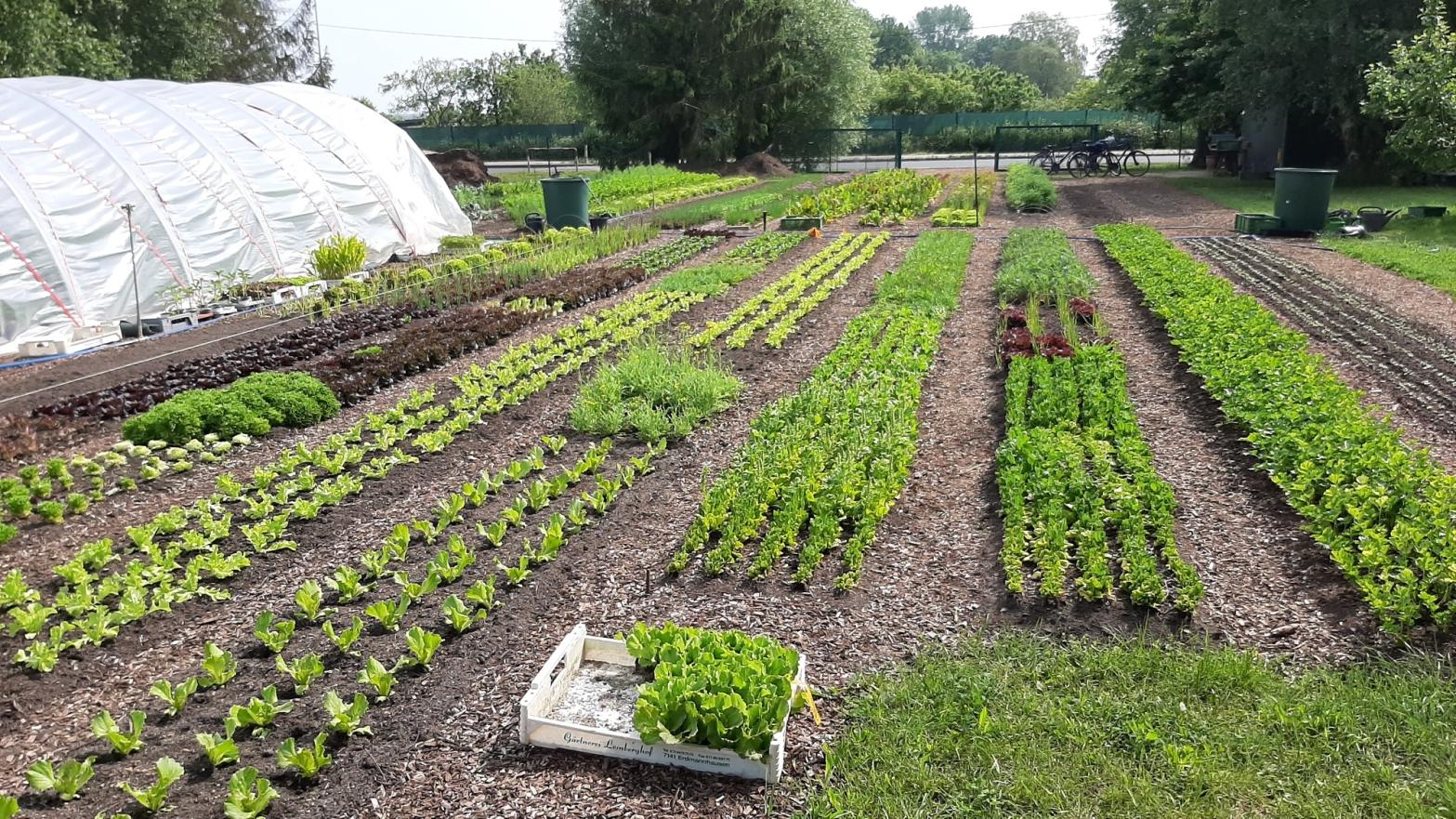 Bild über Beete mit Gemüse und Kräutern