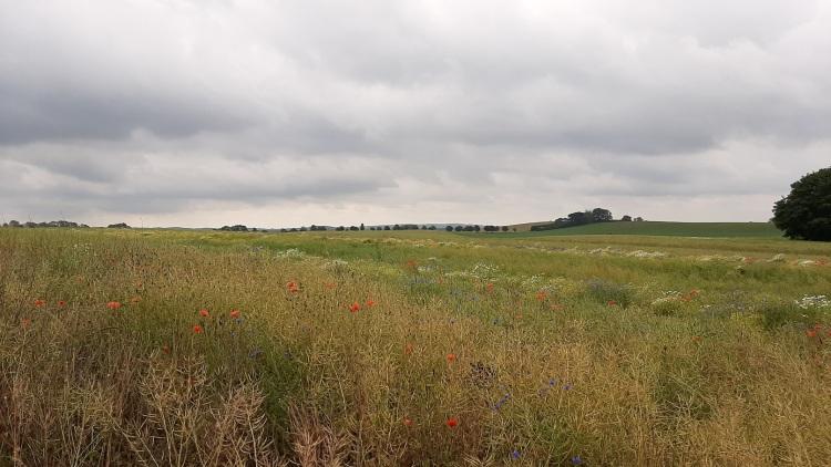 Landschaft bei Levitzow